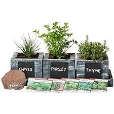 indoor herb garden kit. Herb Garden Planter By Pro\u0027s - Complete Kit Indoor Seeds Growing R