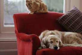 funky furniture sf. Fine Funky Regular Deodorizing Removes Pet Odors From A Sofa And Funky Furniture Sf