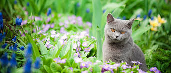 how to keep cats out of garden.  Keep 5 Ways To Keep Cats Out Of Your Garden In How H