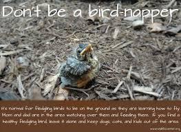 Baby Bird Age Chart Baby Bird The Wildlife Center Of Virginia