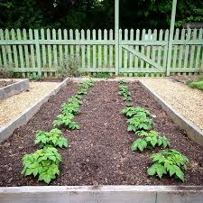 biodynamic gardening. \u2022roots \u0026 Shoots\u2022 Our Potato Patch Is Coming Along Nicely. Biodynamic Gardening