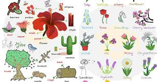 List Of Plant And Flower Names In English With Pictures 7