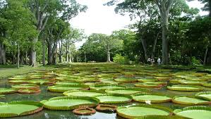 national botanical garden of mauritius