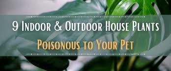 house plants poisonous to your pet