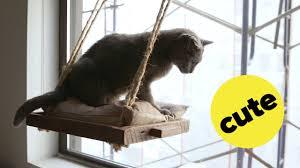 33 unusual design ideas diy cat perch diy window you projects wall outdoor tree pvc
