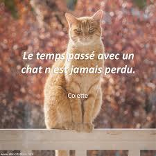 Citations Du Monde On Twitter Le Temps Passé Avec Un Chat Nest
