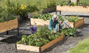 a woman and her dog tending to raised garden beds full of vegetables