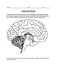 Discover our free coloring pages for kids. Brain Coloring Worksheets Teaching Resources Tpt