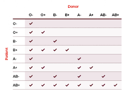 Matching Blood Groups Australian Red Cross Lifeblood