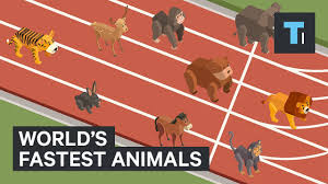 Animal Speed Chart These Are The Worlds Fastest Animals