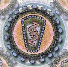 ВИЧ инфекция Википедия ВИЧ инфекция