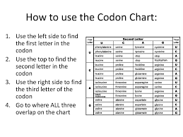 Dna To Rna Codon Chart Ppt Name Three Differences Between Dna And Rna Draw And