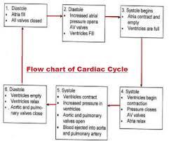 Heart Flow Chart Flowchart Of Cardiac Cycle Biology Body Fluids And
