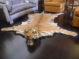 indian antique registered taxidermy tiger rug prior to endangered classification for