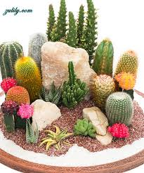 Small Picture 15 Awesome Mini Cactus Gardens Mini cactus garden Mini cactus