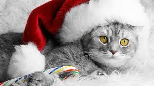 Christmas Kitty Computer Wallpapers ...