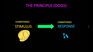 Classical Conditioning In The Classroom Classical Conditioning Learn How To Create Habits For