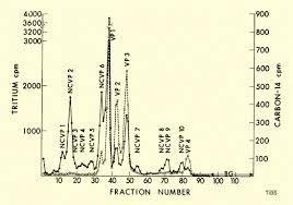 sds polyacrylamide gel electropsis