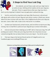 Lost Pet Flyer Maker Flyer help Create an online flyer using some of the sites on this 99