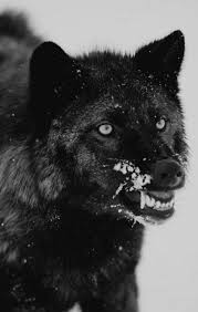 The Singing Phantom   Black wolf, Cute dogs and puppies, Wolf eyes