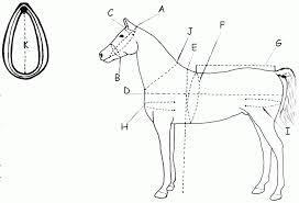 Comfy Fit Harness Cob Horse Draft Horse