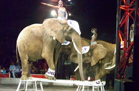 Universal Soul Circus Philadelphia Seating Chart Universoul Circus Universoul Circus Philadelphia