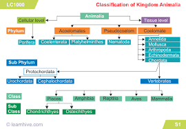 Biodiversity Classification Chart Learnhive Cbse Grade 9 Science Diversity In Living