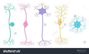 Basic Neuron Types Stock Vector Royalty Free 796693849 Shutterstock
