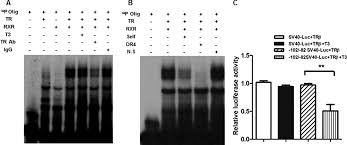 trb 1021 08 black white. Nuclear Corepressors Mediate The Repression Of Phospholipase A2 Group IIa Gene Transcription By Thyroid Hormone* Trb 1021 08 Black White