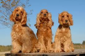 Fotos de animales de todo tipo incluyendo mascotas que más te gustan Images?q=tbn:ANd9GcSojqgp85RGaEj64HkkPQnZYtLtn9Fv_ZirEyEnBUcQ_loEyyv1