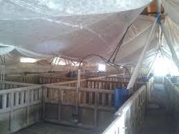 Ofrecen Primas Para Aumentar Producción De Carne Porcina  Razas Precio Granja De Cerdos Engorde