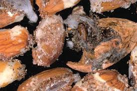 Best Practices For Almond And Walnut Harvest Sample Evaluations ...
