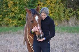 Ein Ganz Besonderes Pferd Hello Balance Webseite