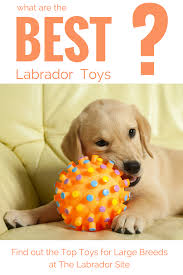 Best toys for labs