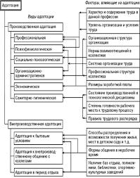 Менеджмент Особенности адаптации персонала в организациях  Рис 1 Виды адаптации и факторы на нее влияющие