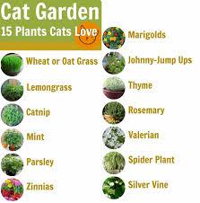 cat friendly garden designrulz 4