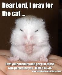 Funny Christian Quotes With Pictures Best Of Dear Lord I Pray For The Cat Christian Funny Pictures A