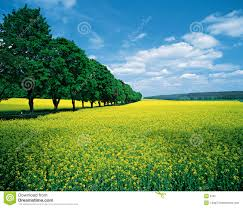 Free Spring Spring Fields Allee Stock Image Image Of Agriculture Patience 8787