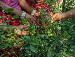 Kitchen Garden India Women Cultivate Backyard Bounty Technoserve Business Solutions