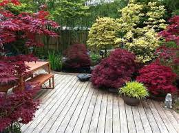 small japanese garden transforms this