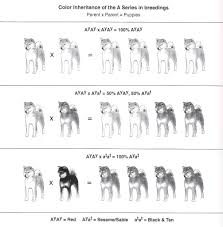 Alaskan Malamute Size Chart Shiba Inu Size Chart Dogs Breeds And Everything About Our