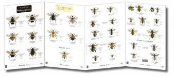 Bee Identification Chart Uk Field Guide Bees
