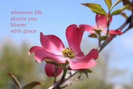 Beautiful Flowers Quotes Best of Magnolia Flowers Inspirational Quotes For 24 Beautiful Flowers