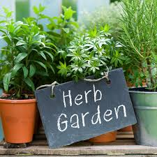 Kitchen Gardening Garden Landscaping Herbs And Groceries By Apartment Gardening As