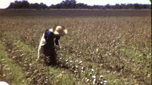Farm amateur home videos
