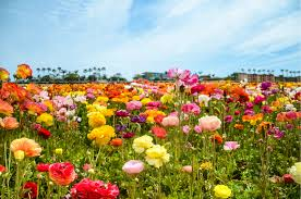 north county san go botanic gardens nurseries