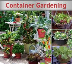 container garden vegetables.  Container Container Vegetable Gardening Intended Garden Vegetables T
