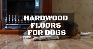 Best hardwood floors for dogs Hickory Christuck How To Select The Best Hardwood Floors For Dogs Repairdaily