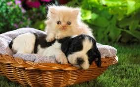 cute basket buds