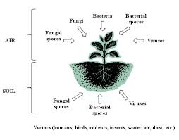 essay on medicinal plants essay on medicinal plants gxart photo  importance of medicinal plants essay definition homework for you importance of medicinal plants essay definition image